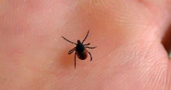 Comment savoir si l'on est atteint de la maladie de Lyme